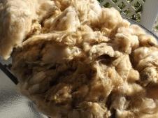 close up wool