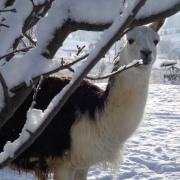 january snowfall 045